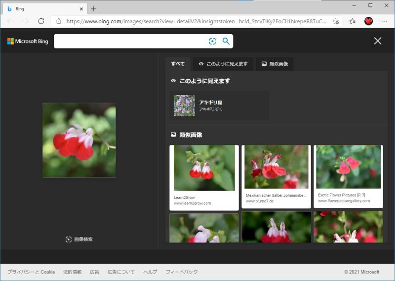 Microsoft Bingの画像検索のウィンドウ