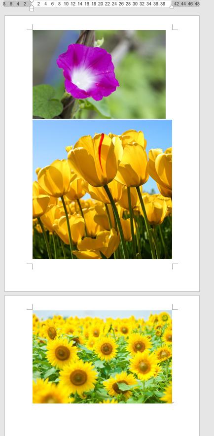 複数の写真が挿入